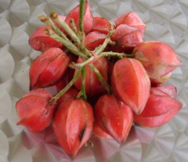 Native Fruit